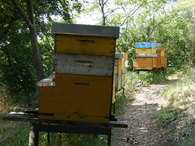 5 - l'apiario