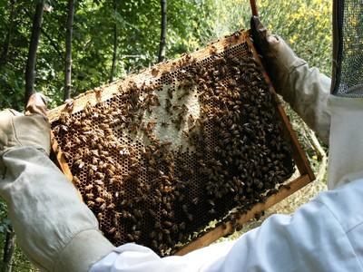 12 - api al lavoro