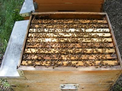 11 - api in casa