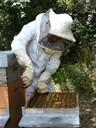 10 - la casa delle api