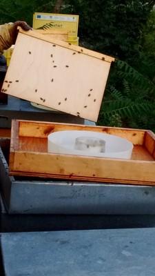 Alberto apre la casetta delle api