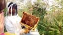 Alberto ci mostra le api all'opera