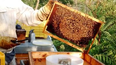 L'ape regina circondata dalle sue ancelle