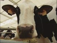 Puntata di report sulla carne